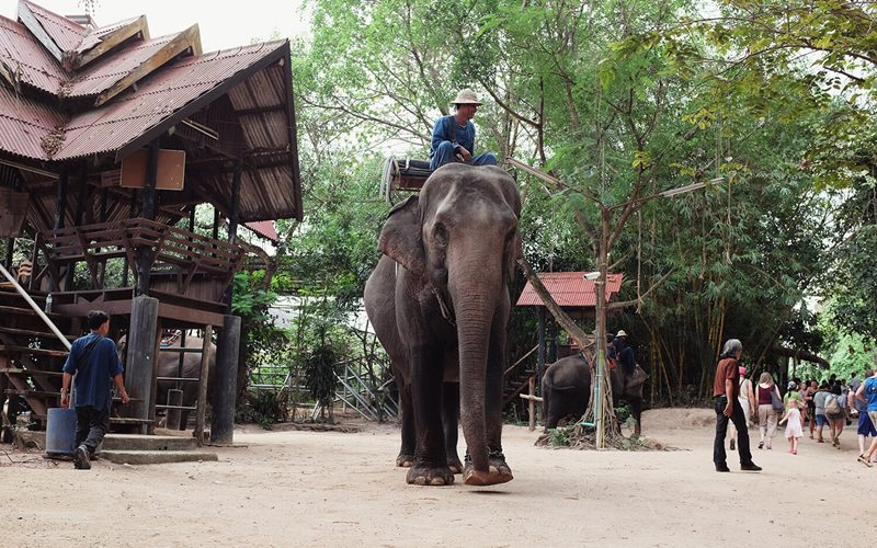Sikhara Plago Resort :Pattaya Elephant Village